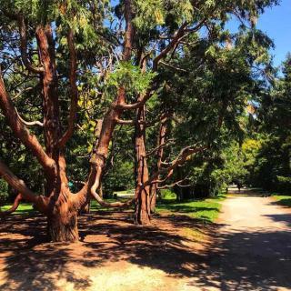 Décor pour votre tournage : arbre au jardin des Plantes à Toulouse