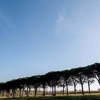 Décor pour votre tournage : le Domaine de Preissac, grande allée bordée d'arbres