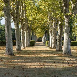Décor pour votre tournage : le parc du domaine de Rochemontès