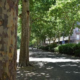 Décor pour votre tournage : les allées François-Verdier bordées de platanes à Toulouse